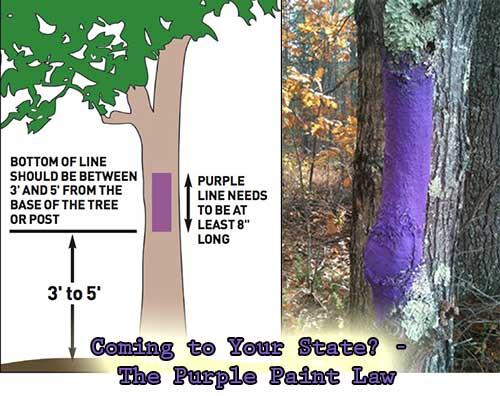 purplepaintlaw